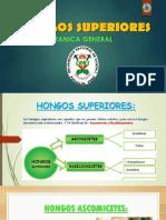 HONGOS SUPERIORES.pptx