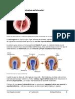 Capa Embrionaria