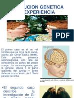 genetica y experiencia