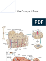 Parts of Compact Bone.pptx