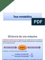 C08D Tasa metabólica