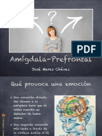 Amígdala-Lóbulo prefrontal.pdf