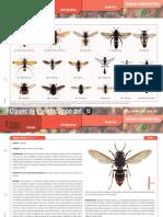 Fichas Identificacion Avispa Asiatica y Proximas