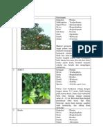 Identifikasi Flora Darupono