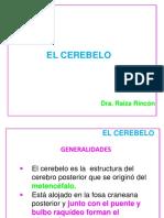 CEREBELO modificado 2017.pdf