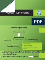 2. Medula Suprarrenal