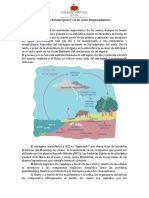 020-1M-BIOLOGÍA-CICLODELNITROGENOYROLDELOSCICLOSBIOGEOQUIMICOS
