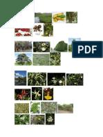 Plantas Costa Sierra Anazonia y Galapagos