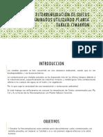 Planta Tabaco Cimarron