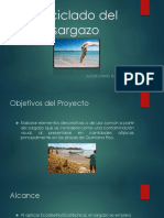 Reciclado Del Sargazo