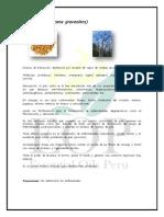 Palo Santo.pdf