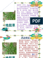 地胆草.pptx