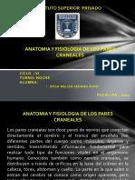 ANATOMIA Y FISIOLOGIA DE LOS PARES CRANEALES.pptx