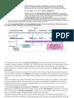 Genoma y Genes Trancripción y Traducció