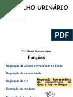 Aula Xerox Aparelho Urinario Histologia i 27-10-15 (1)