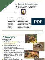 Qué Son Los Artrópodos - CR