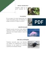 Animales y Plantas en Peligro de Extinsion