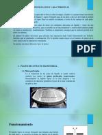 EXPO DE PLANTAS(con ejercicio).pptx