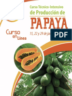 Curso Produccion Tecnico-papaya