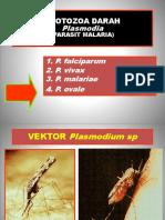 Protozoa Darah