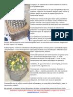Cactusi _ Covera.ro