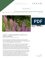 Lupinul – o Plantă Deosebită Ce Merită Un Loc Special În Grădină – Gardenbio.ro