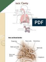 Anatomy Respiratory