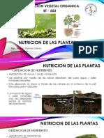 Producción Vegetal Orgánica NVO