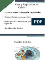 División Cellular