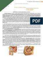 Morfo Reprodução P1.pdf