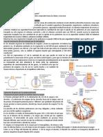 3Fisiología Respiratoria II Parte Ana