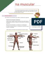 Sistema Muscular Fichas