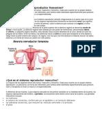 Qué Es El Sistema Reproductor Femenino