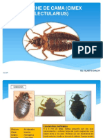 Chinchedecamacimexlectularius1 150730123027 Lva1 App6891 (1)