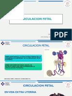 Circulascion Fetal