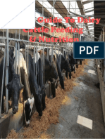 a brief guide to dairy cattle feeding nutrition