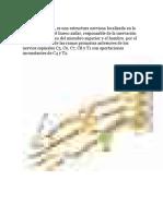 Anatomia de La Cervical