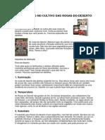 8 Segredos No Cultivo Das Rosas