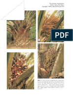 The Oil Palm 4th Edition
