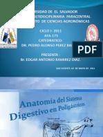 anatomiadelsistemadigestivodepoligastricos-110618222341-phpapp01.pptx
