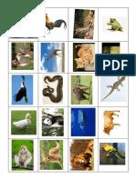 gambar haiwan karnivor herbivor omnivor