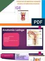 Patologías de La Laringe