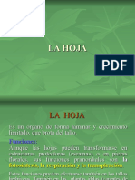 Morfología HOJA