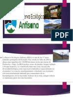 Ecologia Rea