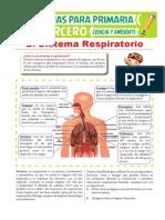 Partes Del Sistema Respiratorio Para Tercero de Primaria