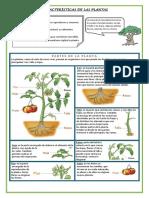 ficha de plantas.pdf