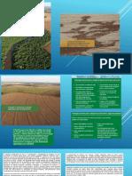 Plantio Direto - Consorcio