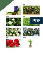 flores.docx