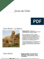 Fauna Hierbas Zonas Chile