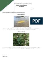 UNIVERSIDAD REGIONAL AMAZÓNICA IKIAM.docx